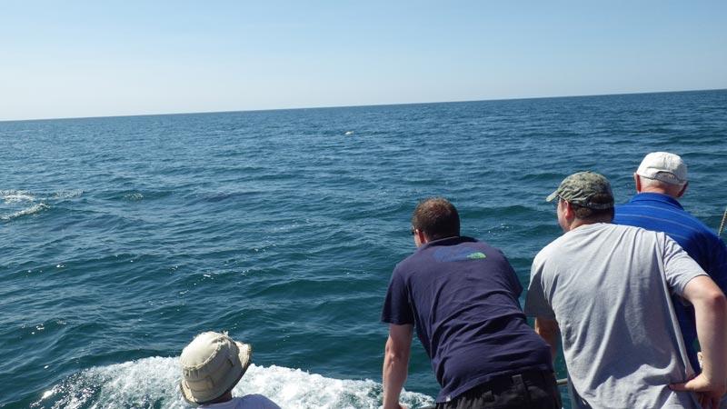 Dolphins Days Dorset