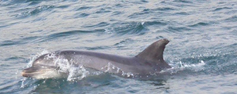 Dolphins Sightseeing Lyme Regis Dorset